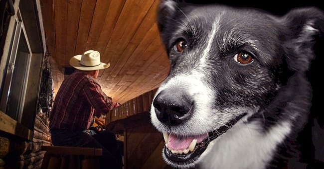 Daily Joke: Man in a Bar Bets His Dog Can Shoot