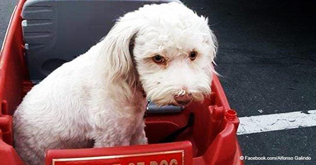 Cámara oculta muestra a cartero supuestamente rociando con spray de pimienta a un perro inocente