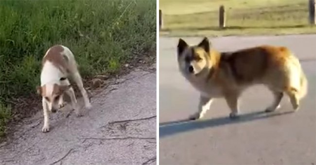 Woman Has Been Waking Up Every Day at 4 am for 10 Years to Help Rescue Stray Dogs