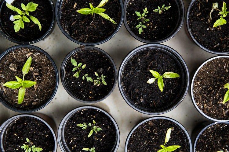 Des plantes dans un pot | Photo : Pixabay