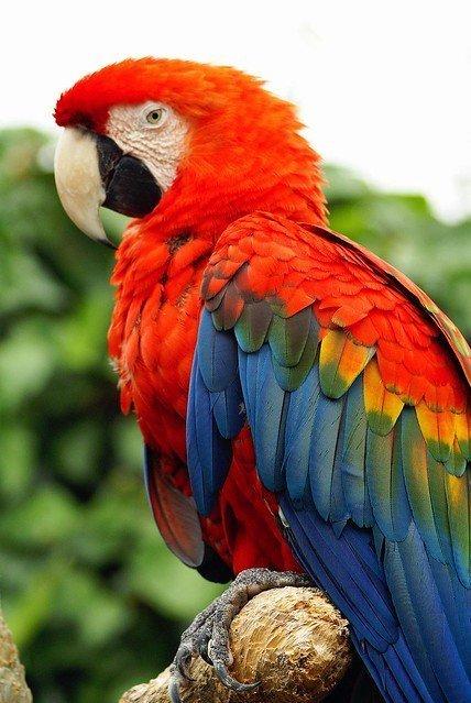 Papagei | Quelle: Flickr
