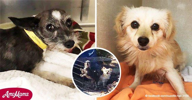 Perritos asustados fueron abandonados en una jaula con la basura tras sus dueños mudarse