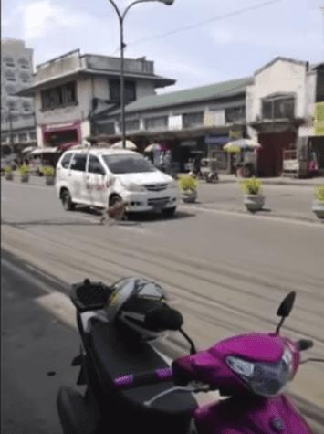 La chienne tentant d'alerter les conducteurs. l Source: YouTube/Video Break