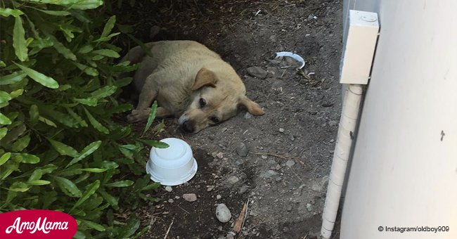 Perrito avistado viviendo en la mugre tras ser abandonado por familia que se mudó