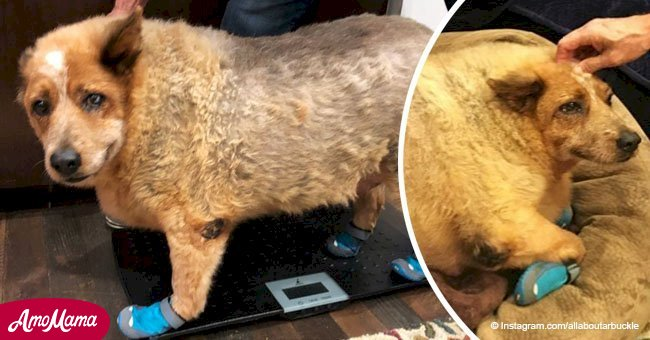 Overweight dog made an amazing transformation after rescue