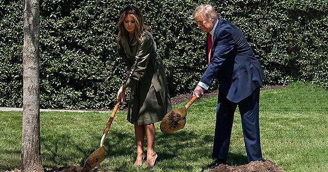 Melania Trump Flaunts Toned Legs in Olive Belted Coat While Planting Maple Tree on Earth Day