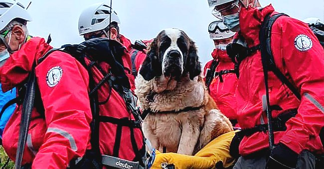 Mountain Rescue Crew Brought down an Injured St Bernard from the Highest English Peak