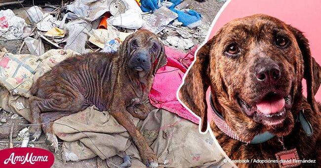 Vivía sola y triste en una pila de basura, pero su transformación tras el rescate es increíble
