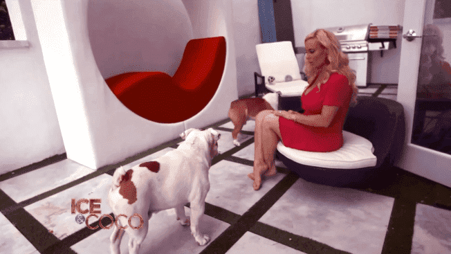 Coco Austin and Ice-T's dogs playing in the swimming pool area of their mansion | Source: YouTube/Cocosworld