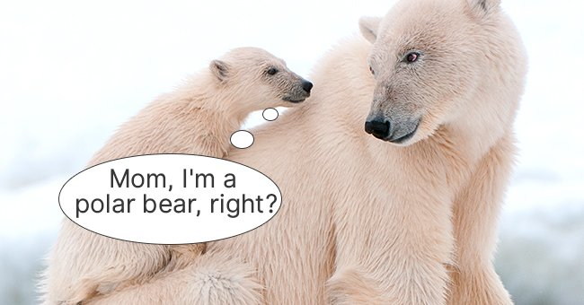 The baby polar bear was extremely curious! | Photo: Shutterstock