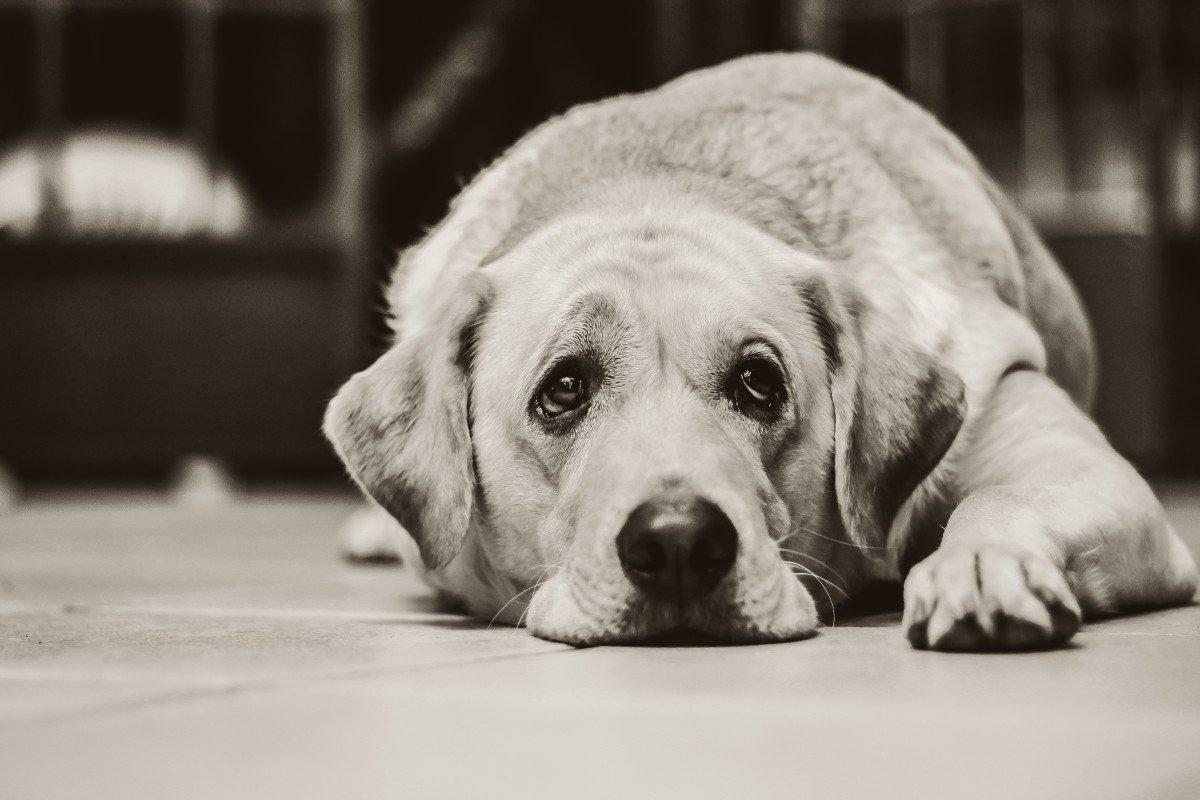 Un chien seul et triste: l Source: Pxhere