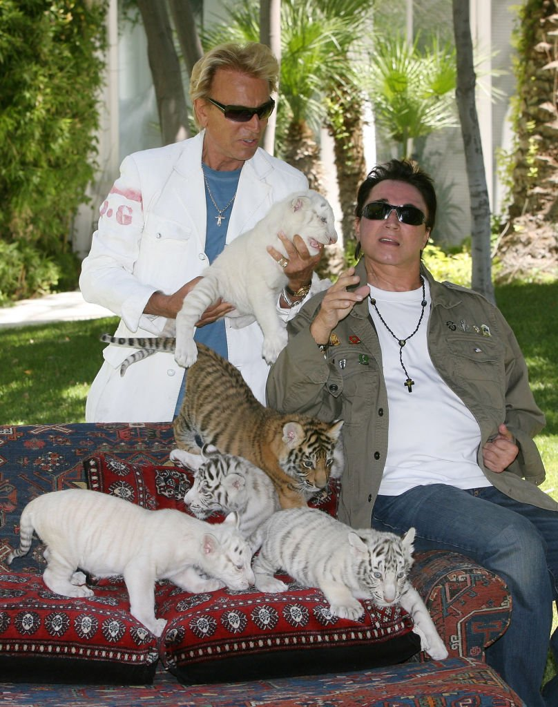 Siegfried und Roy mit 6-Wochen-altem Tigerbaby, 2008 | Quelle: Getty Images
