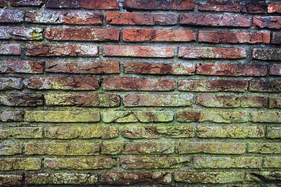 Moisissure sur un mur. Image : Pixabay