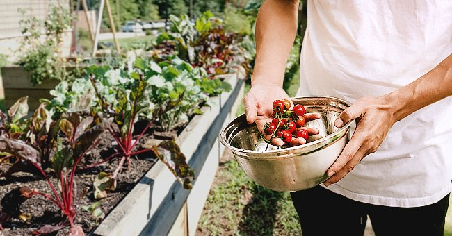 Check Out These Simple but Useful Tips to Start a Vegetable Garden