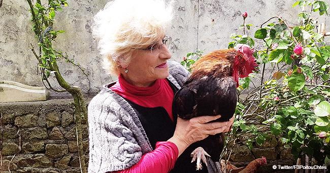 Île d'Oléron : Le coq Maurice aura un procès