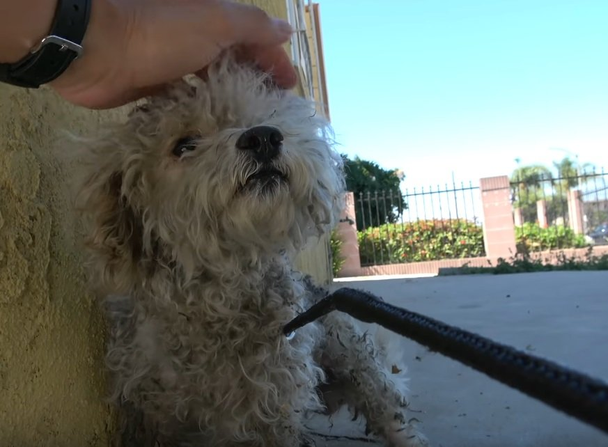 Fasby vor seiner Rettung | Quelle: YouTube/ Hope For Paws - Official Rescue Channel
