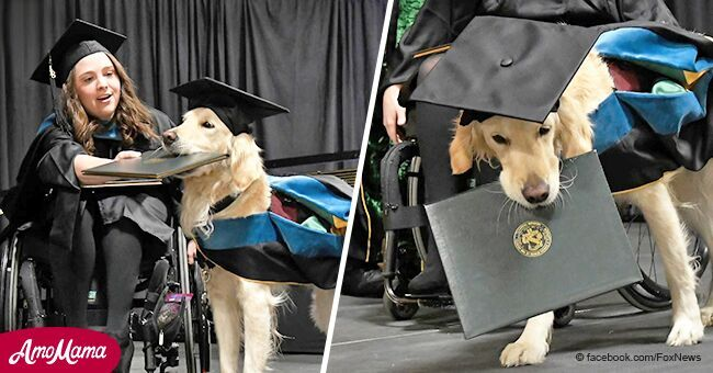 Perro fiel que ayuda a dueño discapacitado con dolor crónico recibe diploma de graduación