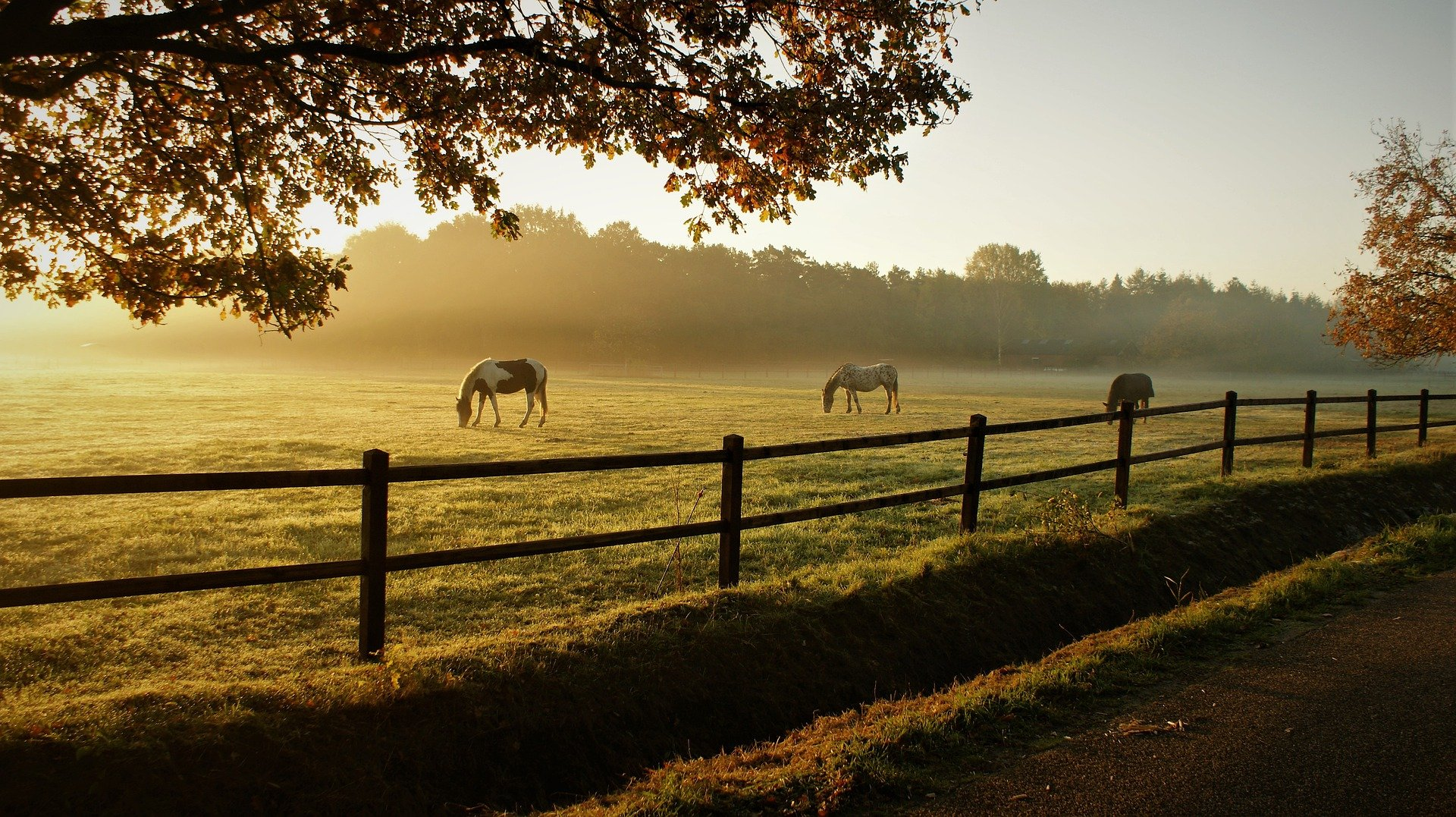 Pictured - Horses grazing on a ranch   Source: Pixabay