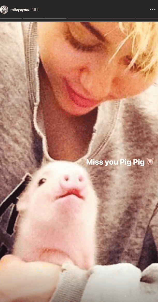 Miley Cyrus and Pig Pig back in 2015. I Image: Instagram/mileycyrus