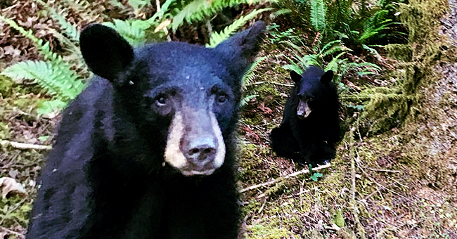 Baby Bear Shot Dead after People Feed Him to Take Selfies