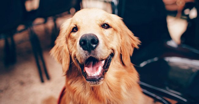 Photo of an excited dog   Shutterstock.com
