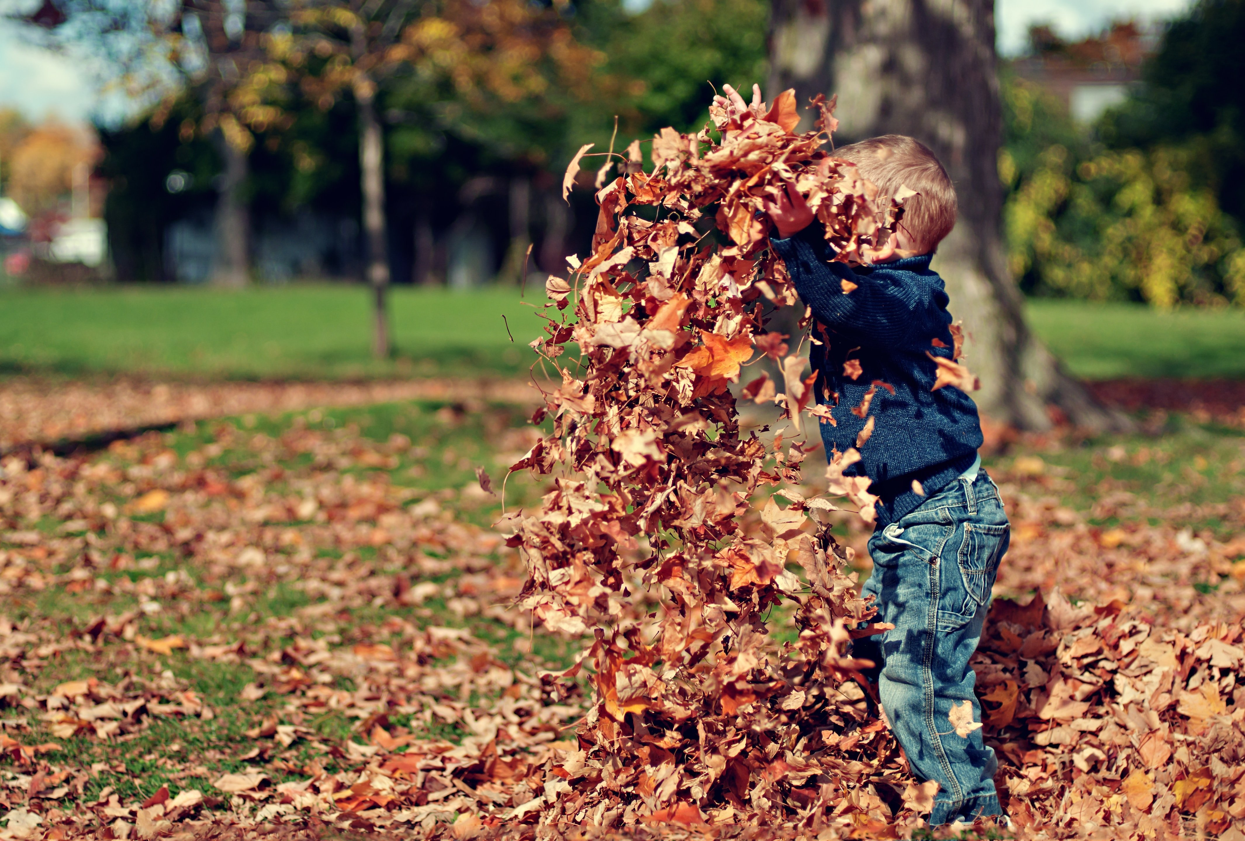 A child playing with the raked leaves | Source: Unsplash.com