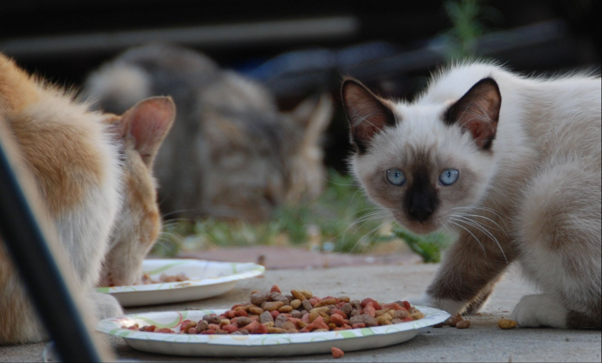 Gatos alimentándose | Imagen: Flickr