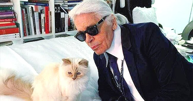 Karl Lagerfeld Left Part of $200M Fortune to His Cat — Meet the Designer's Adored Pet Choupette
