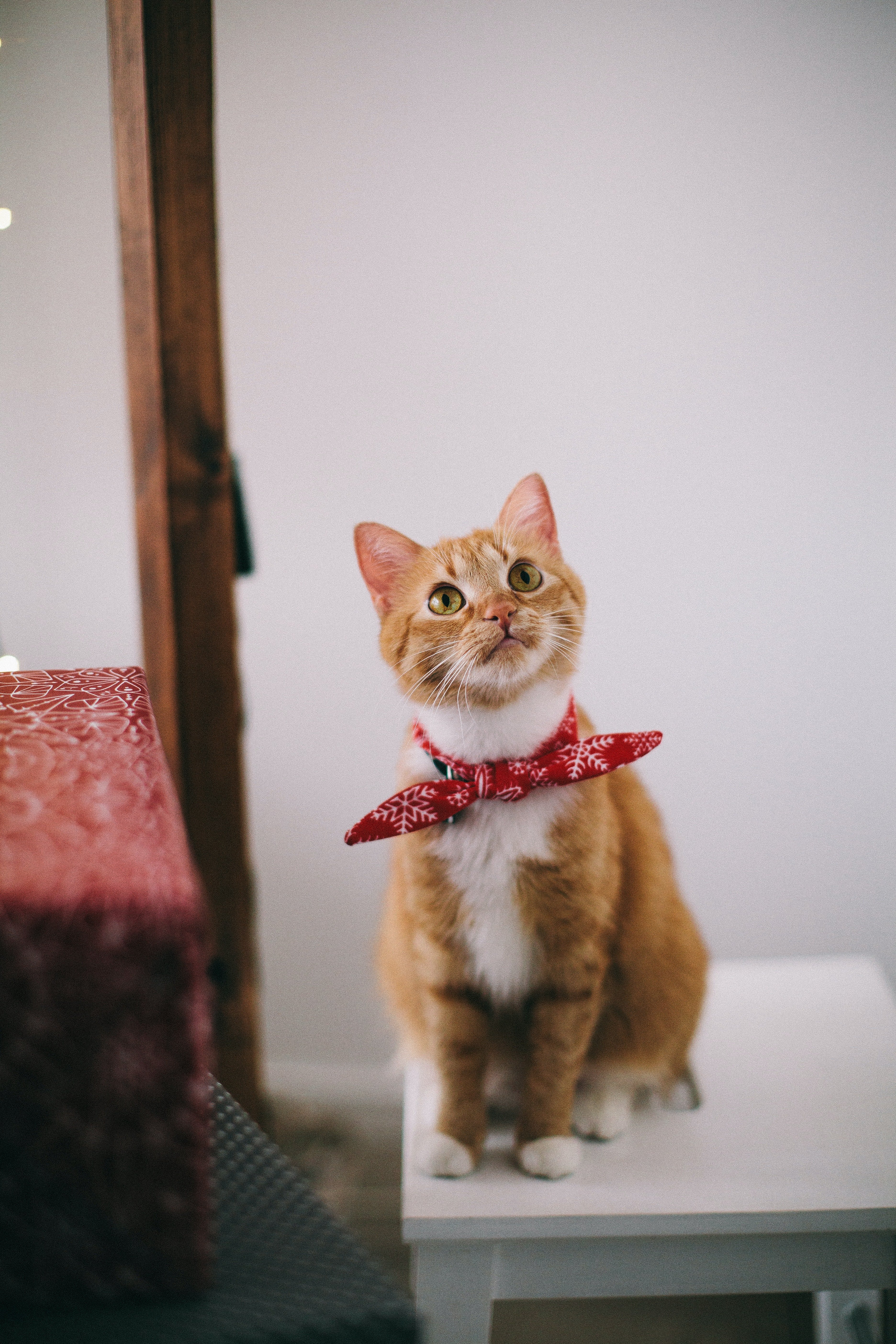An image of a cat   Photo: Pexels