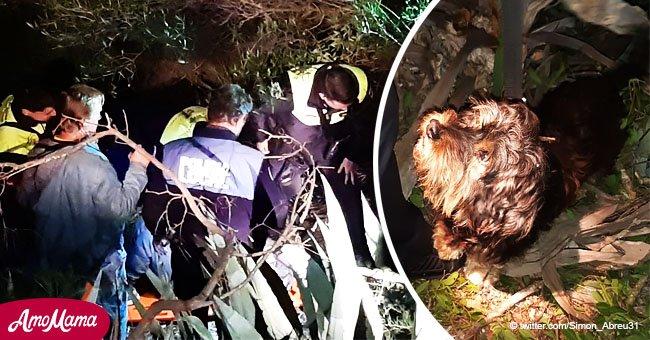 Hombre de 81 años pasa siete horas en un barranco tras caerse y lo rescatan gracias a su perro
