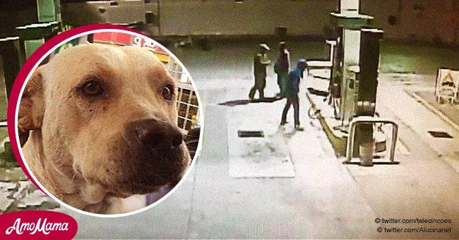 Ein ausgesetzter Hund, der von den Mitarbeitern einer Tankstelle adoptiert wurde, verteidigte seine neuen Freunde vor Dieben
