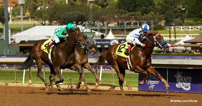 Another Horse Dead after Training at CA Track, Marking the 22nd Horse Death since Late Dec.