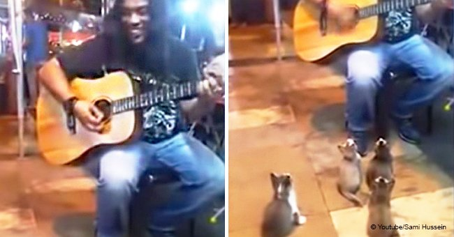 This street musician was about to quit for the day until 4 cats started listening in viral video
