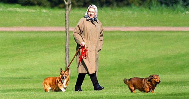 Queen Elizabeth II pictured walking her two dogs at Winsor Castle, 1994, UK. | Photo: Getty Images