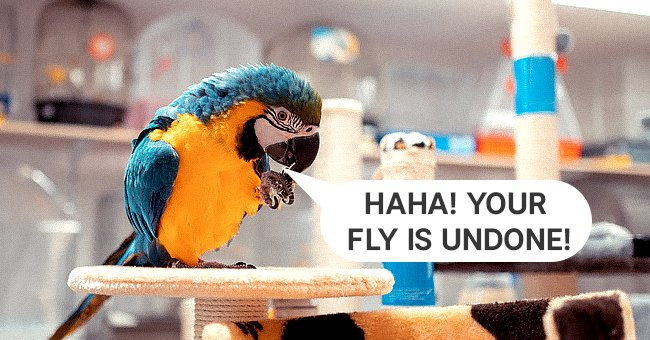 The parrot was clearly not coming slow! | Photo: Shutterstock