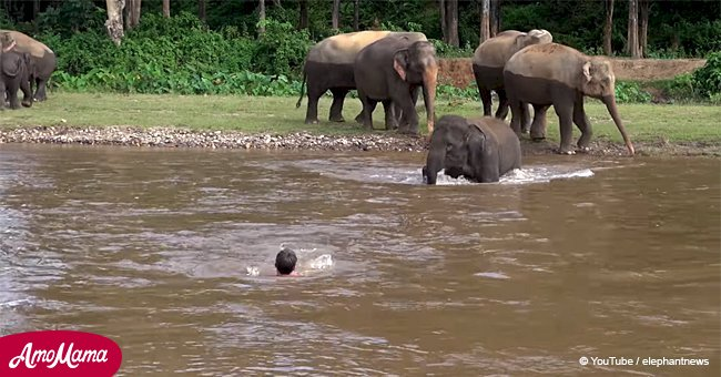 Baby elephant notices man 'sinking' in a river and his unexpected reaction goes viral