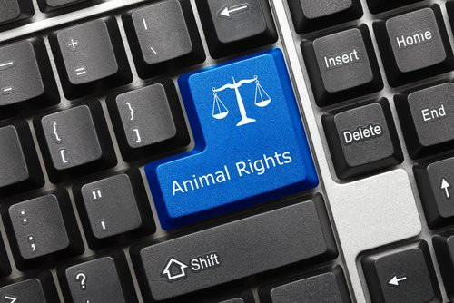 Conceptual animal rights keyboard. | Source: Shutterstock.