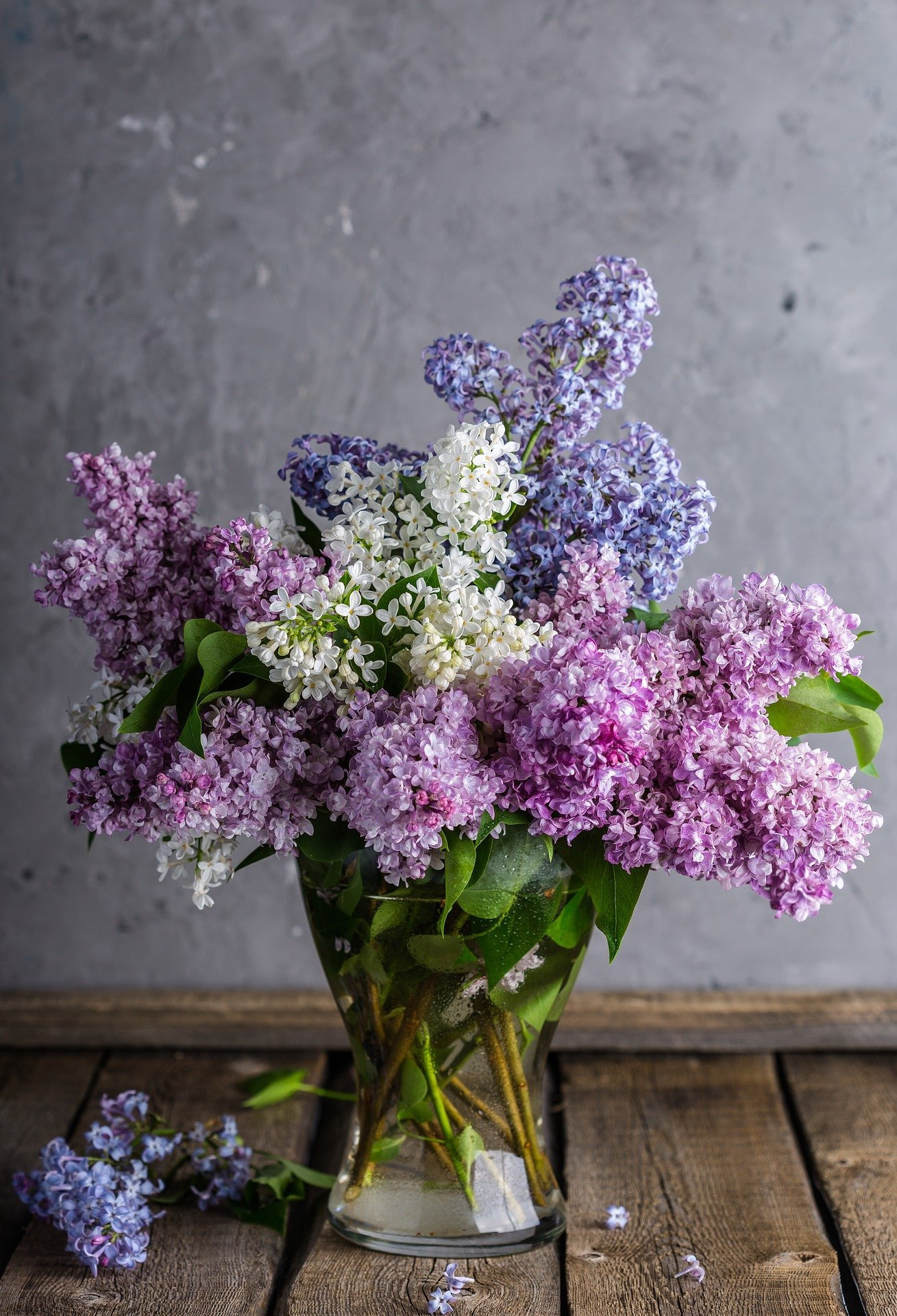 Lilac stalks in a clear vase of water with different colored blooms | Photo: Pixabay/Дарья Яковлева