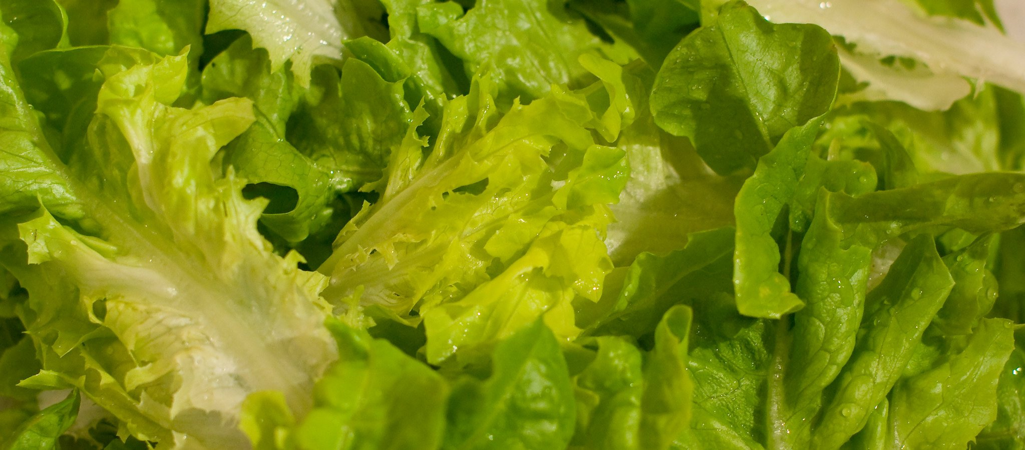 A photo of pieces of fresh, crisp green lettuce. Image taken on August 31, 2008   Photo: Flickr/Paul Tomlin