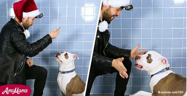 Mago hace truco de cartas a perro de un refugio y él tiene la más graciosa reacción