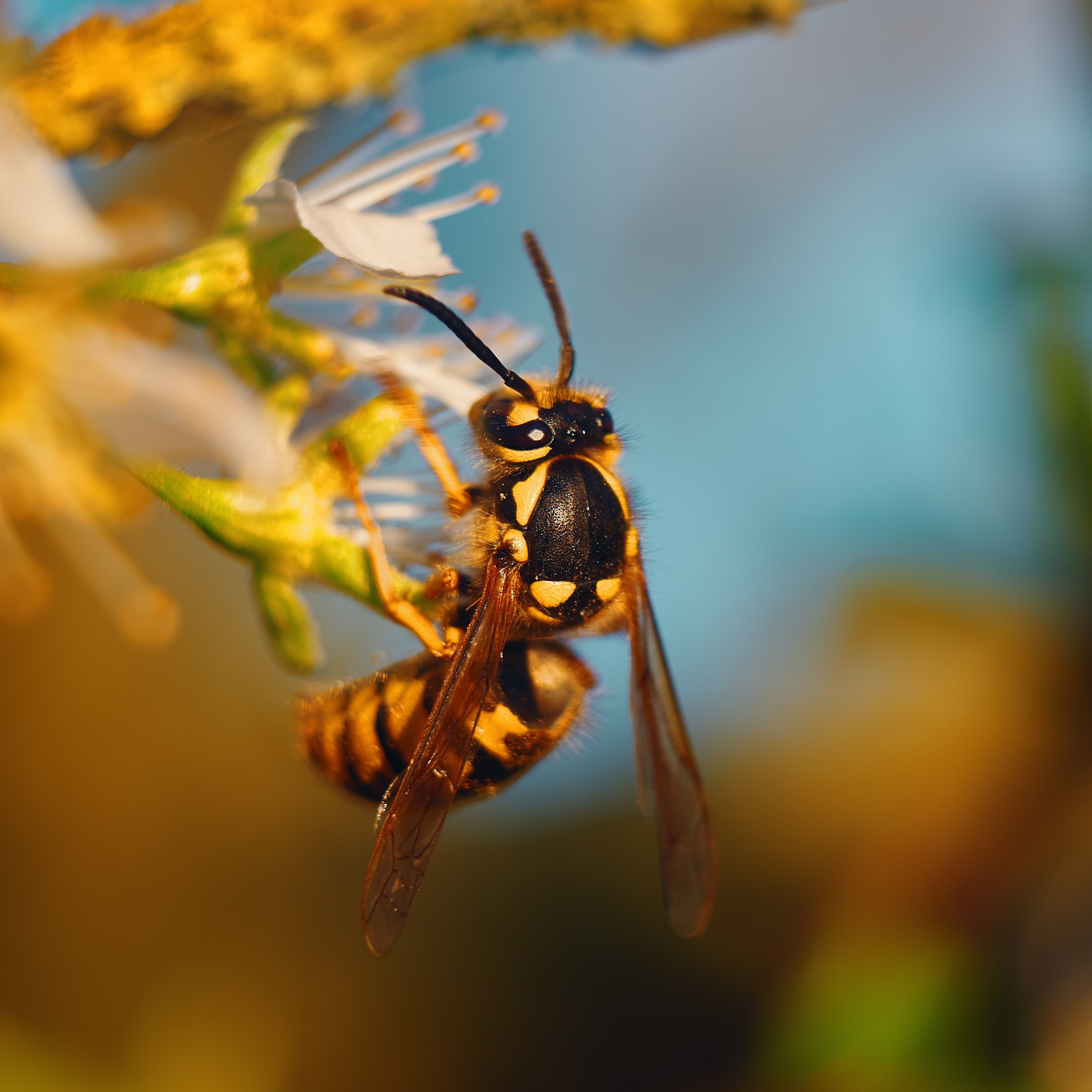 Wasp sitting on a flower | Thomas Millot on Unsplash