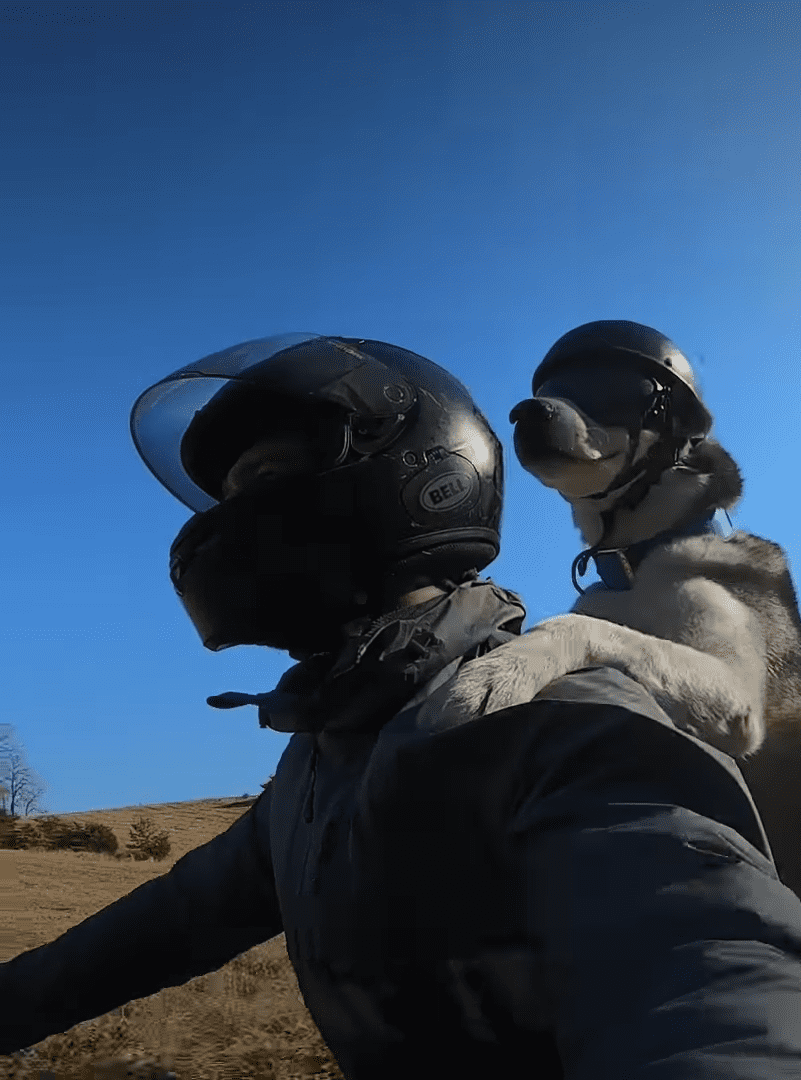 Michael Fiala and his dog Sox riding on a motorbike together. | Source: Facebook: The Dodo