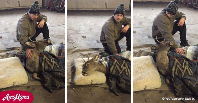 Der Mann, der einen Hirsch aus einem eingefrorenen See rettete, wird bestrafft, weil er ihn nach Hause nahm