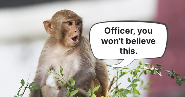 """""""If only this monkey could tell me what really happened here,"""" thought the policeman.  