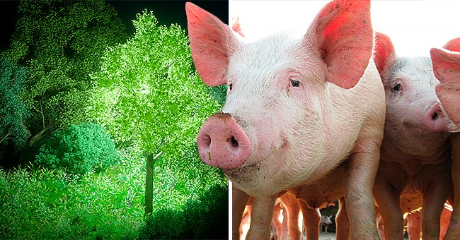 Daily Joke: Clever Man Used a Trick to Make Trees Glow and Make Money Out of It