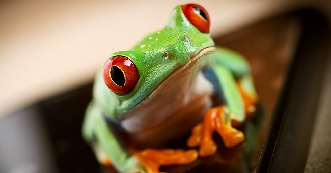 Daily Joke: A Man Found a Talking Frog on His Way