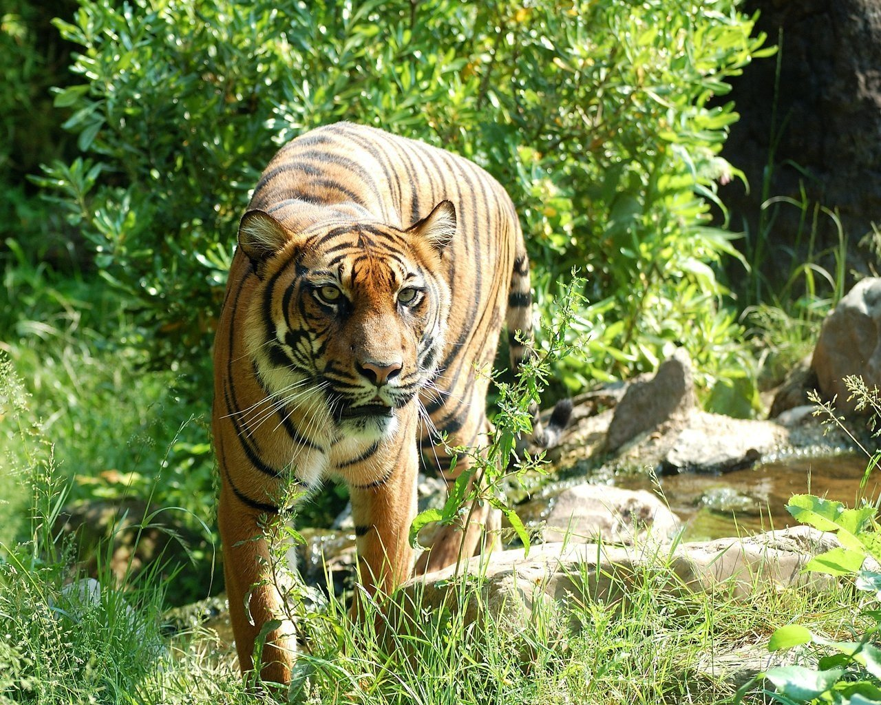 Picture of a tiger in a park | Photo: Pixabay