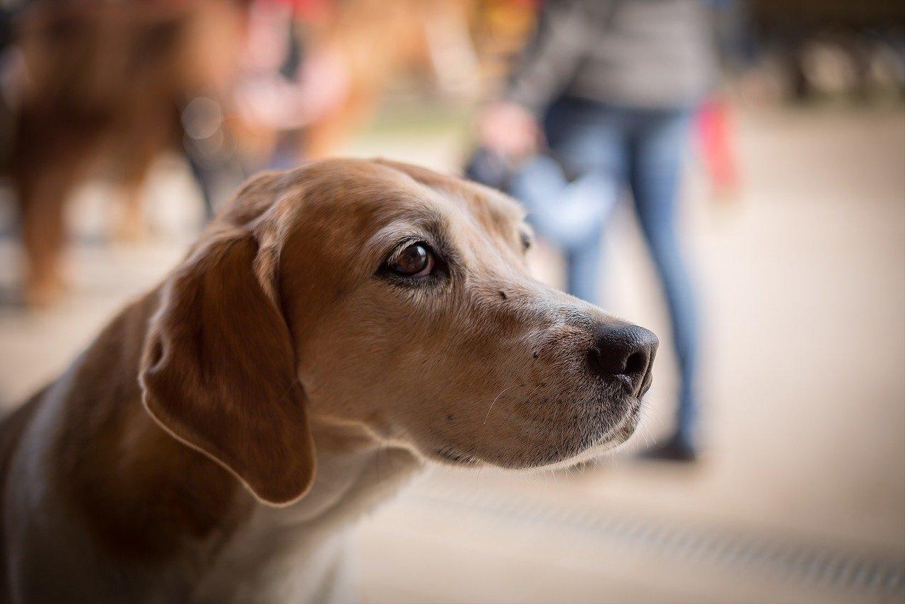 Perro triste. | Foto: Pixabay
