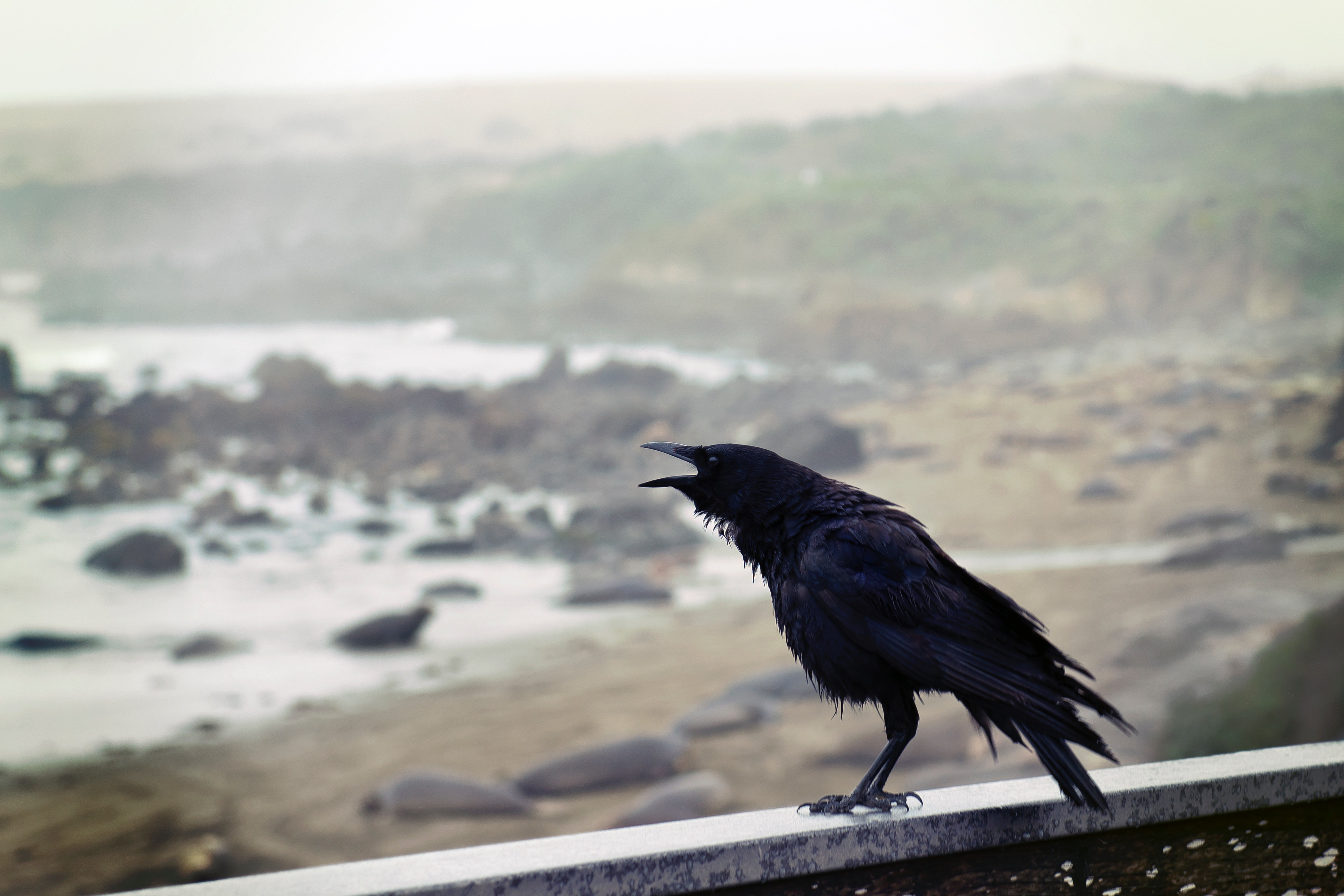Pictured - A black bird perching on a concrete wall with an ocean view | Source: Pixabay