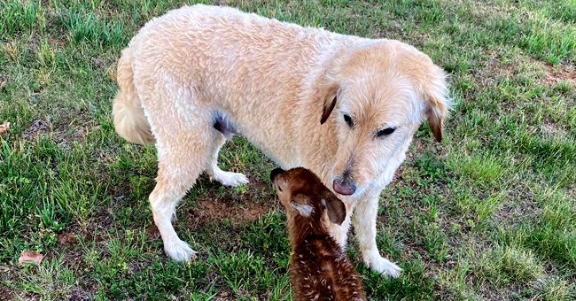 Fawn Returns to Visit the Dog That Saved Him from Drowning in a Lake